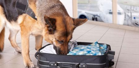 détection canine punaise de lit congélation/surgélation