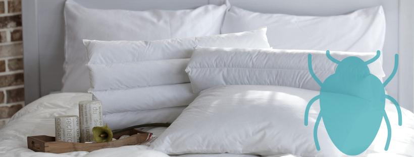 tout savoir punaises de lit
