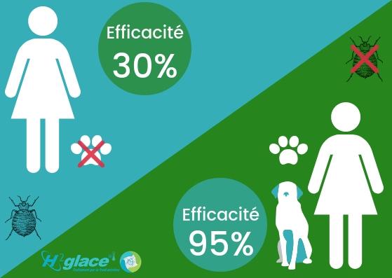 Efficacité détection canine punaises H2glace partenaire